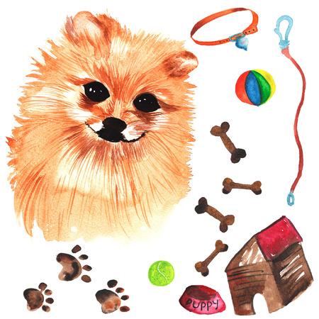 Veterinaire kit bestaande uit Pommeren hond en accessoires voor honden, waterverf, met de hand geschilderd