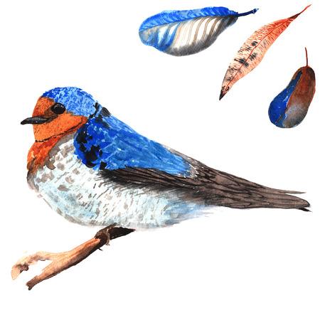 Een set van de hand getekende aquarel met vogel Hirundo neoxena en veren