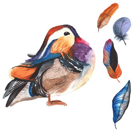Een set van de hand getekende aquarel met vogel galericulata Aix en veren