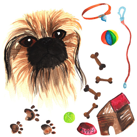comprising: Veterinary kit comprising Pekingese and accessories for dogs, watercolor, painted by hand