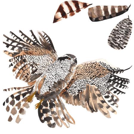 Een set van de hand getekende aquarel met bird Hawk en veren