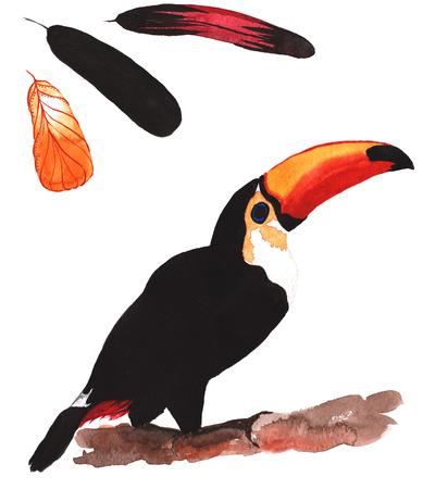 Een set van de hand getekende aquarel met vogel Ramphastos toco en veren