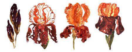 Set van aquarel bloemen - gouden irissen, geschilderd in vier verschillende aquarel technieken. Stockfoto