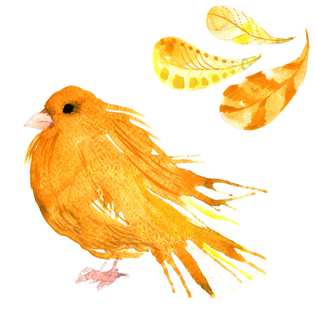 wild canary: set - watercolor bird canary, hand-drawn sketch of the technique , and feathers Stock Photo