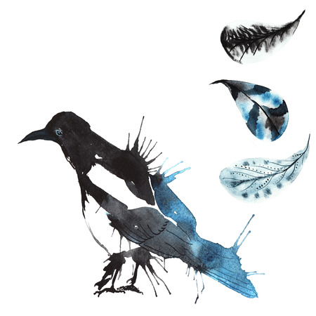 set - aquarel vogel ekster, handgetekende schets van de techniek, en veren