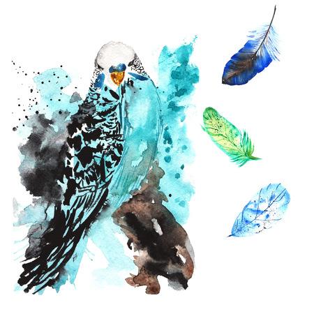 Handgetekende aquarel vogel papegaai en veren Stockfoto