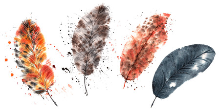 set hand-painted watercolor - four light Fine feathers
