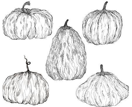 a set of magical pumpkins with patterns , hand-drawn Liner 版權商用圖片