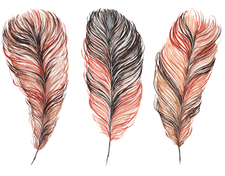 set of feathers isolated on white background, hand-painted watercolor. Brown and his shades. It can be used for the development of a logo, corporate identity, an invitation to the wedding, boho party 版權商用圖片