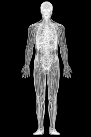 X-ray view of full human body isolated on black background. High resolution 3D image