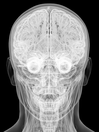 X-ray view of human head isolated on black background. High resolution 3D image photo