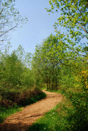Foot path trough a nature area in Belgium Stock Photo - 960877