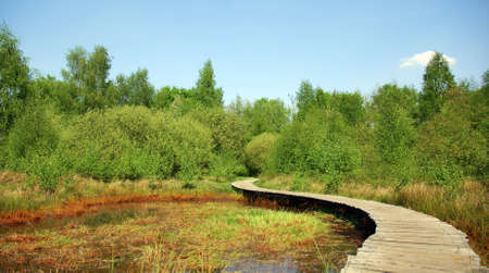 Wooden path above a pond inside a nature area in Belgium Stock Photo - 1150771