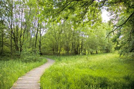 明るいと緑の自然の領域。 写真素材