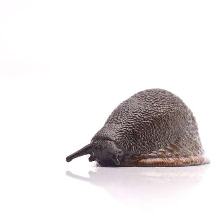 A naked Slug isolated on a white background