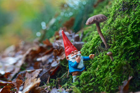 garden gnome: The best Forest Guide ever.