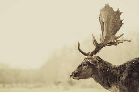 Roe Deer in the field