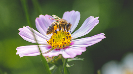 Bee on a flower collecting polen Stock Photo