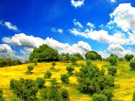 Lichte groen veld met mooie Blue Sky Stockfoto