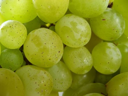 Close up van groene druiven