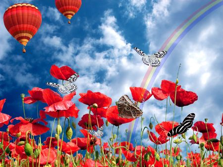 Vibrant field of Poppies over the rainbow photo