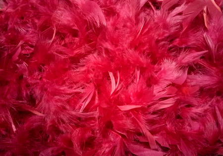 Red feathers plumage background texture