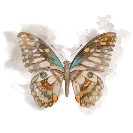butterfly: Big brown watercolor Butterfly. Hand Painted illustration