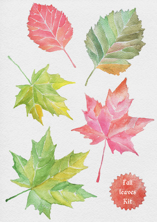 red leaves: Fall Leaves watercolor illustration. Real paper texture.