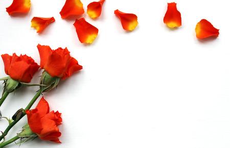 mujer con rosas: Rosas hermosas maqueta para presentaciones. Escritorio de trabajo visi�n superior. plantilla tendencia moderna para la publicidad. maqueta de la marca del producto