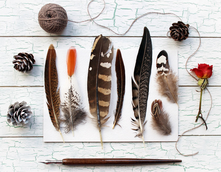naturalist: Feathers, pine cones and a rose on a beautiful shabby chic background. Trendy bohemian photography