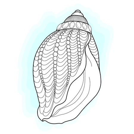 aquatic: stylized sea cockleshell. Hand Drawn aquatic doodle vector illustration. Seashell collection Illustration