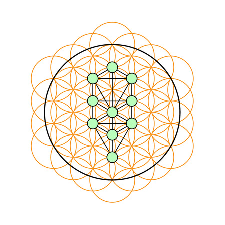kabbalah: Sacred geometry. Tree of life in a Flower of life. Vector Illustration