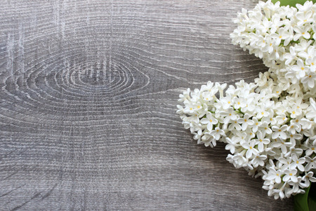 Lilac blossom Mockup on rustic wooden background with empty space for greeting message. Top view. Stock Photo
