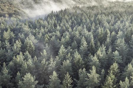 Panorama van nevelig naald houten bos in retro, uitstekende stijl. Mistig landschap met groene sparren.