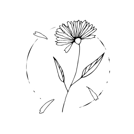 Wild flower sketch drawing hand painted by ink
