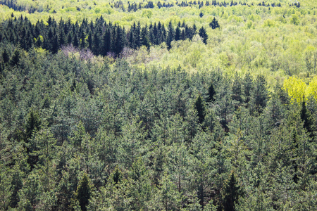 Beautiful spring mixed spruce forest from high angle view Banco de Imagens