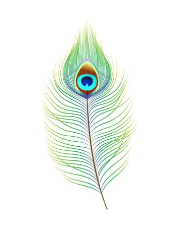 Pluma de pavo real, ilustración vectorial realista. Elemento de decoración para el diseño.