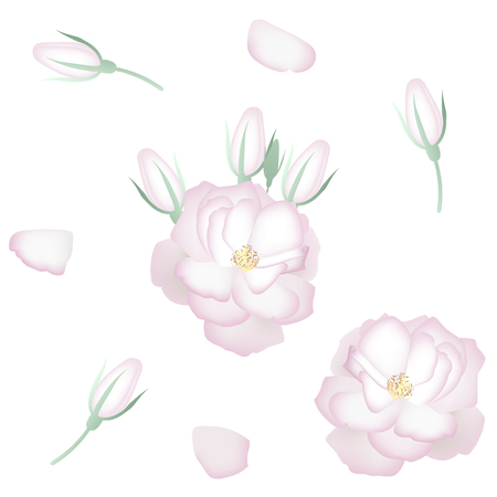 Set of realistic white roses, petals and buds. Decor elements.