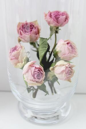 Dry vintage roses in vase, styled photography 版權商用圖片