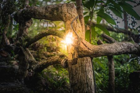 Het licht bij het hek