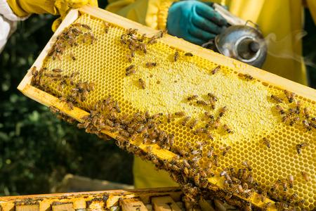 Beekeeper at work Stock Photo