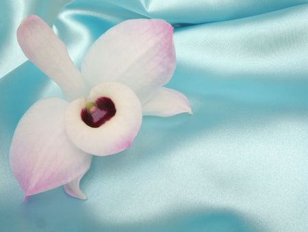 A delicate pink and white orchid on a loosely laid sheet of blue satin, with copy-space and shallow depth-of-field.