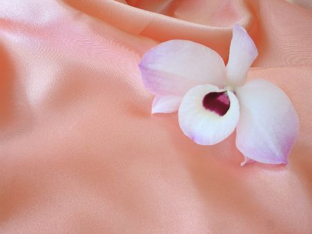 A delicate white and purple orchid on a loosely laid sheet of pink satin, with copy-space and shallow depth-of-field.