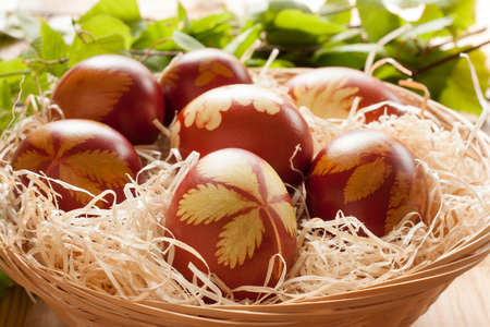 close up of onions in a basket: Easter eggs dyed with onion peels, with a pattern of fresh herbs, with birch branches in the background