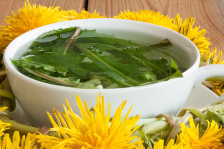 Dandelion tea - hot water poured over fresh dandelion leaves Archivio Fotografico