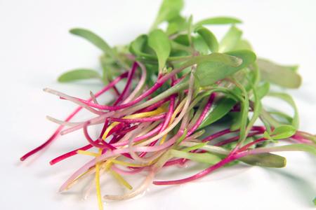 Rainbow Swiss chard microgreens