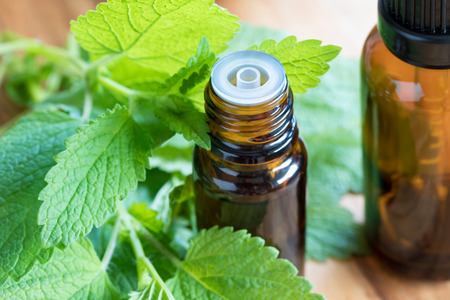 Melissa (lemon balm) essential oil - a bottle with fresh melissa leaves in the foreground Imagens