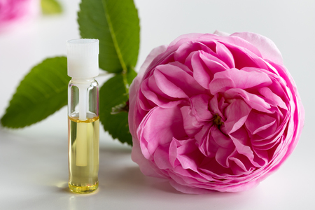 A small bottle of rose essential oil with a rose flower on a white background