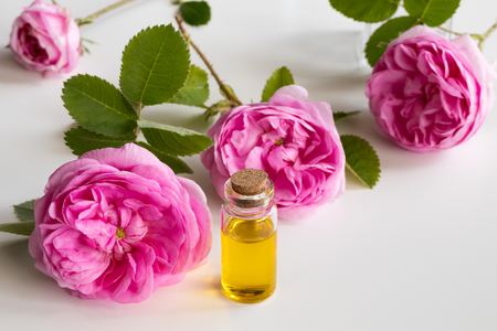 Rose essential oil: a bottle of oil with a rose flowers on a white background 版權商用圖片