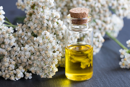 A bottle of essential oil with fresh yarrow flowers on a dark background